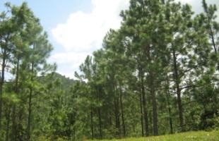 eco-bosque